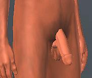penis-big